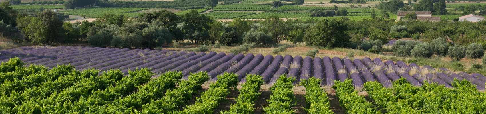 Vignobles de la Vallée du Rhône